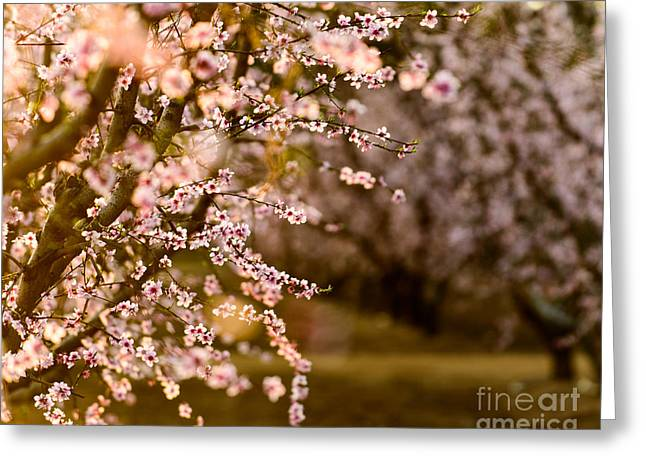 Light In The Orchard Greeting Card by Terry Garvin