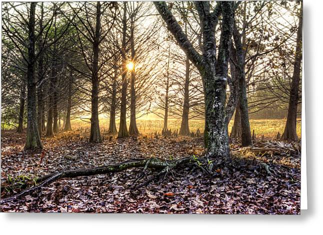 Light In The Trees Greeting Card by Debra and Dave Vanderlaan