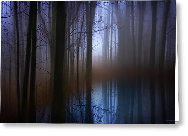 Light In The Woods Greeting Card by Ron Jones