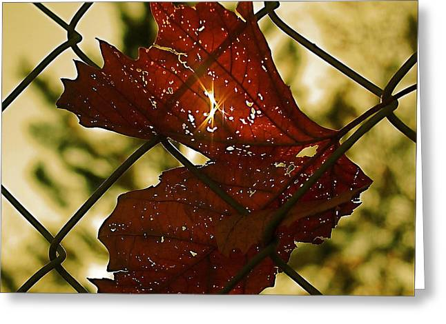 Light Leaf Links Greeting Card by Rona Black