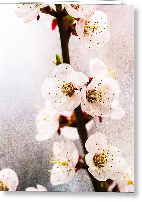 Light Of Spring 1 Greeting Card by Alexander Senin