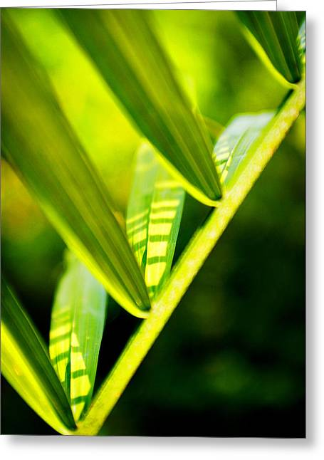 Light On Leaves Greeting Card