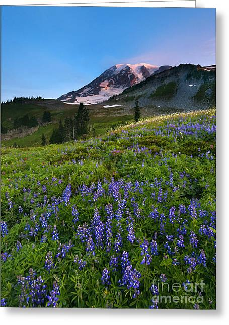 Light On The Mountain Greeting Card by Mike Dawson