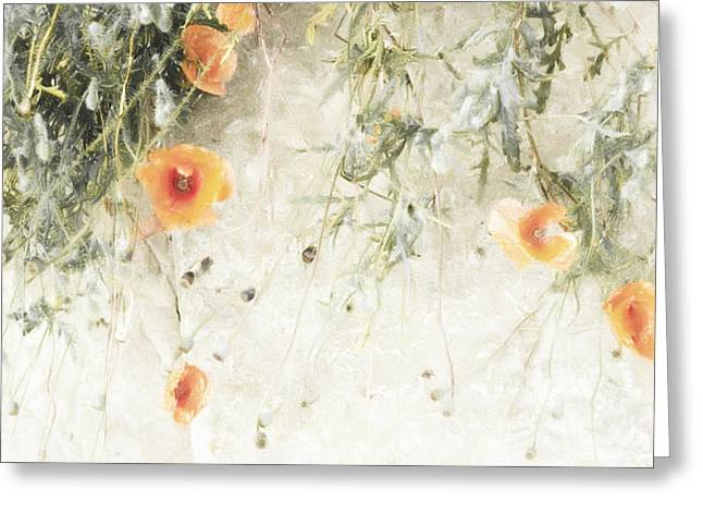 Light Poppies  Greeting Card by Scarlet  James