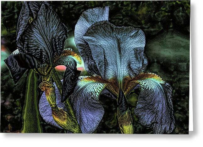 Light Purple Beauties Iris Greeting Card by Lesa Fine