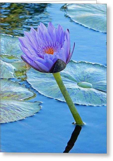 Light Purple Water Lily Greeting Card by Pamela Walton