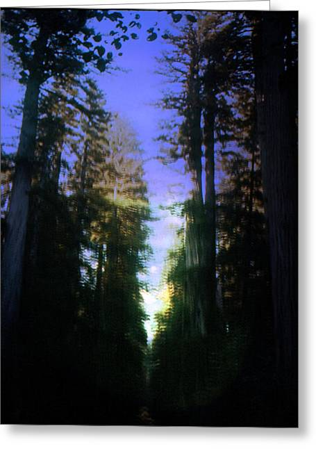 Greeting Card featuring the digital art Light Through The Forest by Cathy Anderson