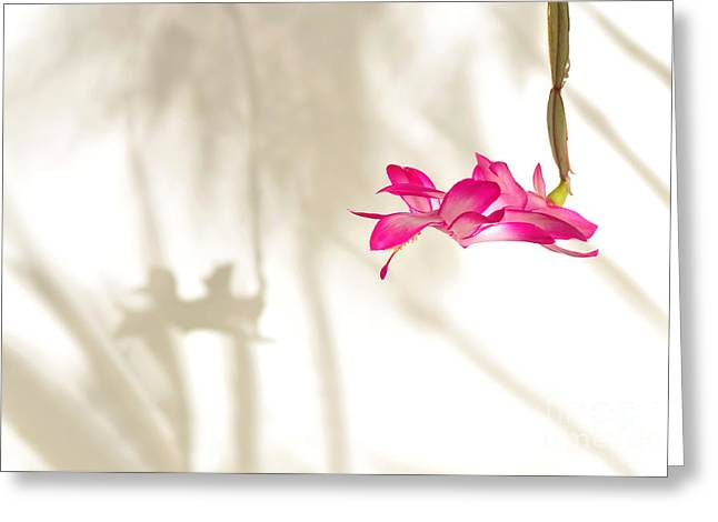 Light..flower..shadow 2 Greeting Card by Kaye Menner