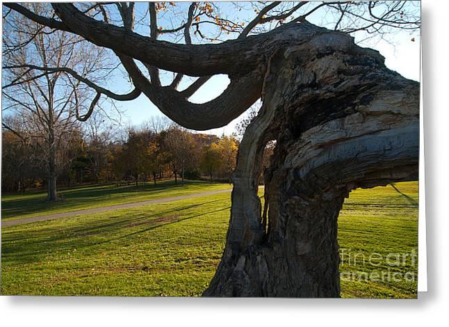 Lightning Tree Greeting Card by Mel Noodelman