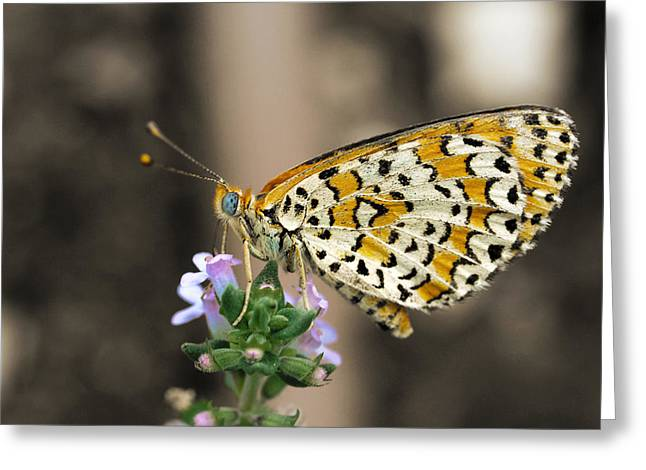 Greeting Card featuring the photograph Like A Flying Tiger by Meir Ezrachi