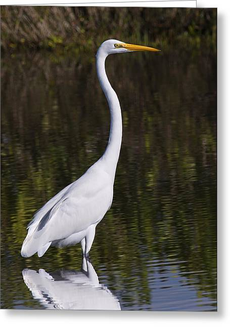 Like A Great Egret Monument Greeting Card by John M Bailey