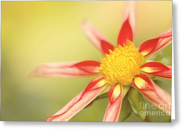 Like Clockwork Greeting Card by Beve Brown-Clark Photography