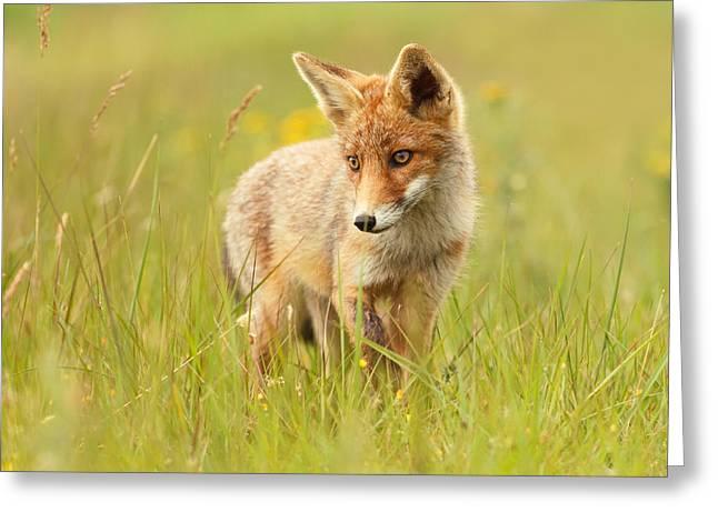 Lil' Hunter - Red Fox Cub Greeting Card