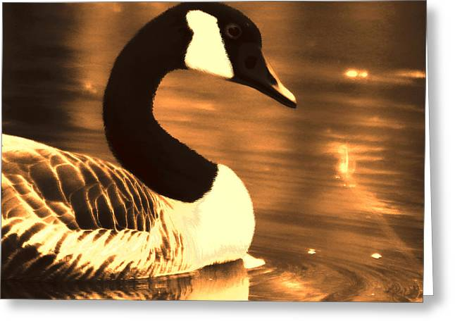 Lila Goose The Pond Queen Sepia Greeting Card by Lesa Fine