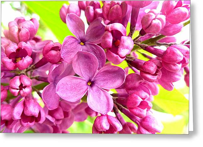 Lilac Closeup Greeting Card by The Creative Minds Art and Photography
