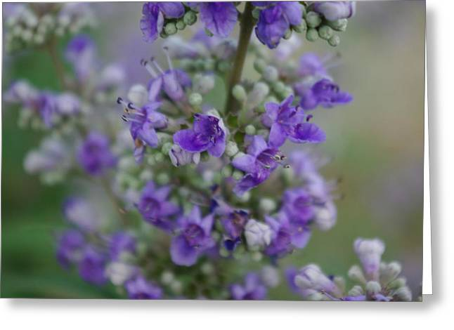 Lilac Dreams Greeting Card by Robyn Stacey
