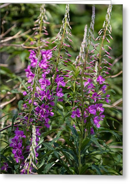 Greeting Card featuring the photograph Lilac Flower by Leif Sohlman