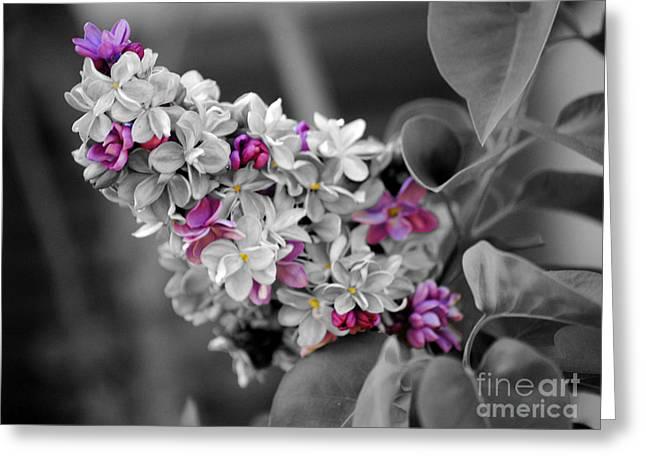Lilac Flowers Greeting Card by Jai Johnson