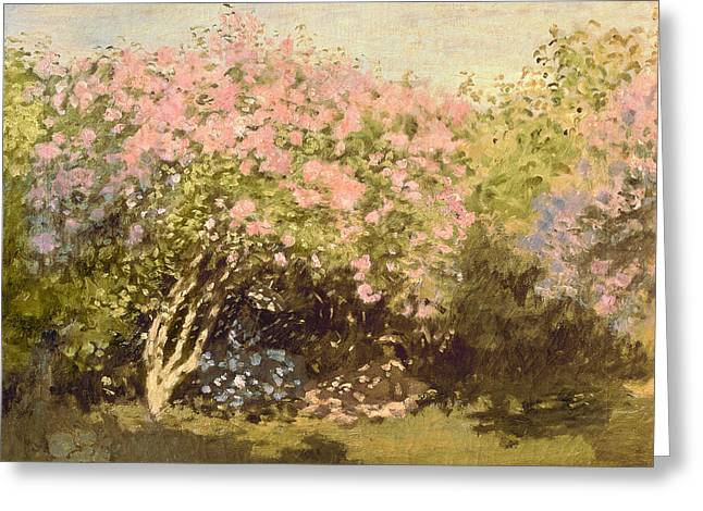 Lilac In The Sun, 1873 Greeting Card