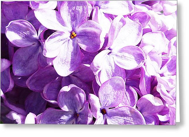 Lilac Greeting Card by Irina Sztukowski