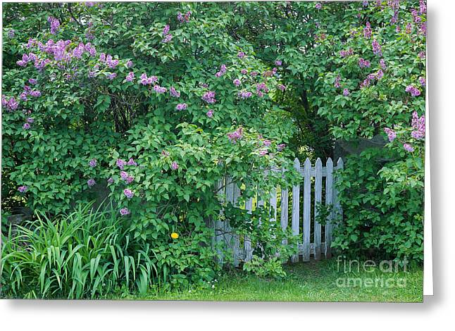Greeting Card featuring the photograph Lilac Season by Alan L Graham