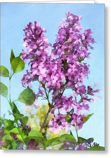 Lilacs Against The Sky Greeting Card by Susan Savad