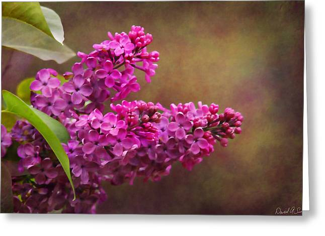 Lilacs Greeting Card by David Simons