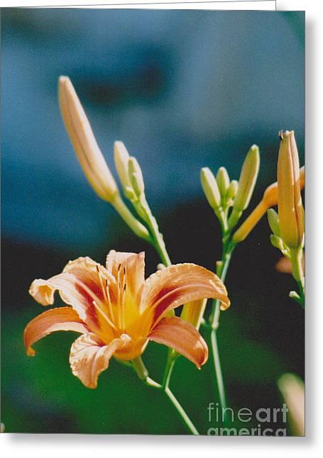 Lilies - 2 Greeting Card