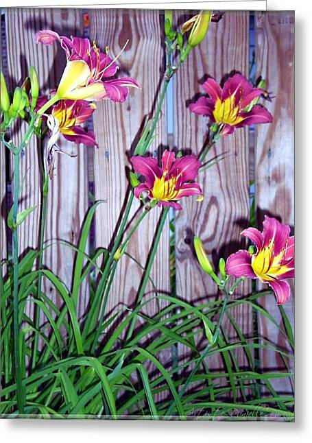 Lilies Against The Wooden Fence Greeting Card