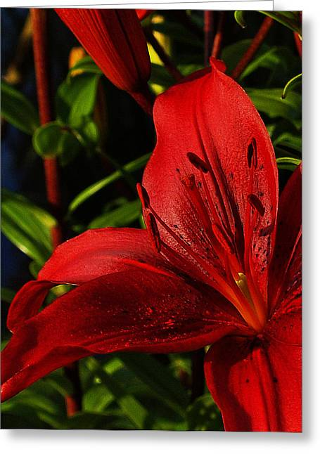 Lilies By The Water Greeting Card by Randy Hall