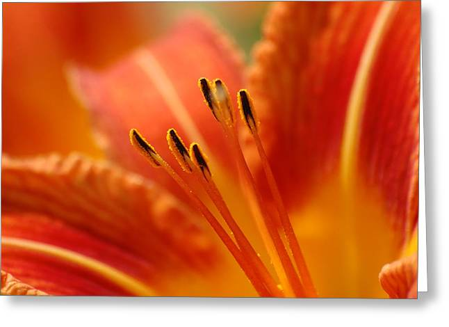 Lilies Heart Greeting Card by Edward Loesch