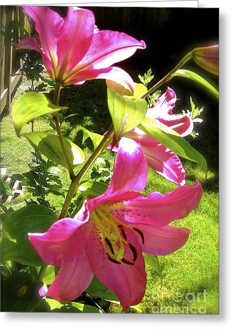 Greeting Card featuring the photograph Lilies In The Garden by Sher Nasser