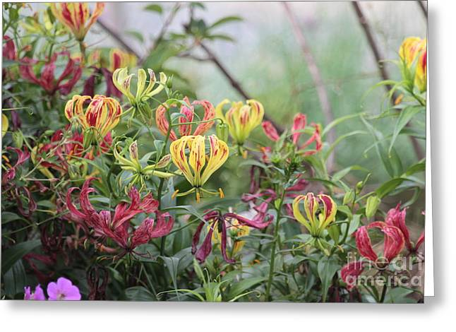 Lilies Of Color Greeting Card by Dwight Cook