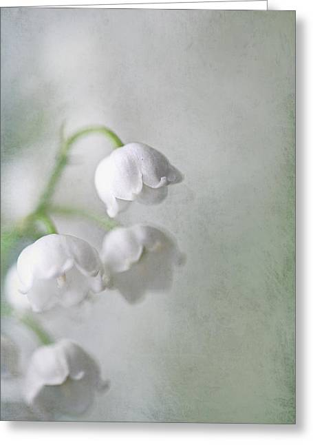 Lilies Of The Valley Greeting Card