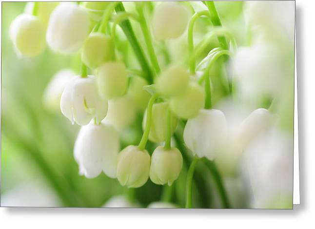 Lilies Of The Valley. Macro Greeting Card by Jenny Rainbow
