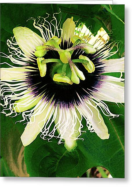 Lilikoi Flower Greeting Card by James Temple