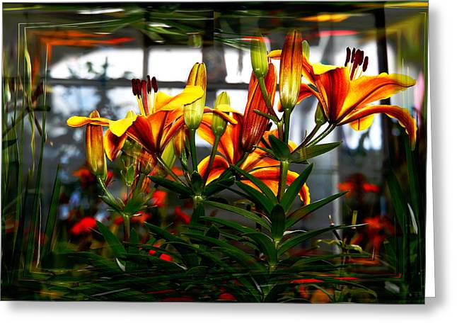 Lilium Greeting Card by Nigel Watts