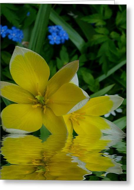 Lilium Of Gold Greeting Card by Pepita Selles