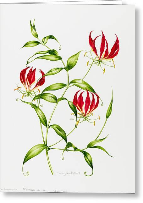 Lilium Rothschildiana Greeting Card by Sally Crosthwaite