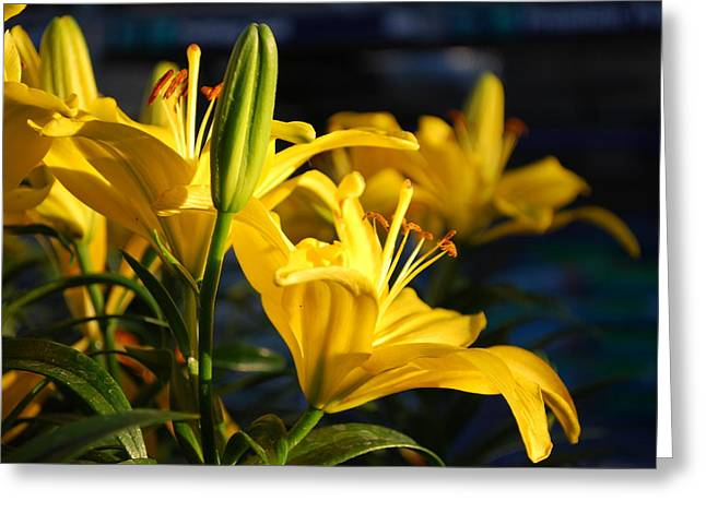 Lillies Of Gold Greeting Card by Billie Colson