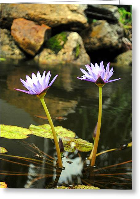 Lillies Of The Pond Greeting Card