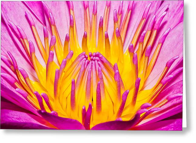 Lilly Greeting Card by James Roemmling