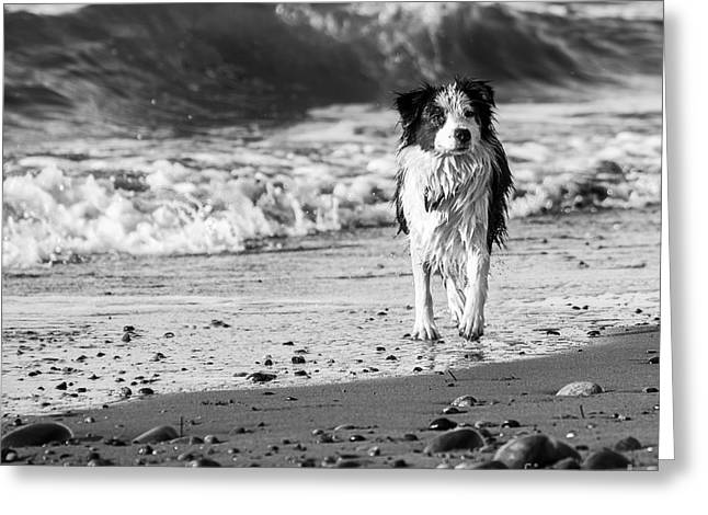 Lilly On The Beach Greeting Card