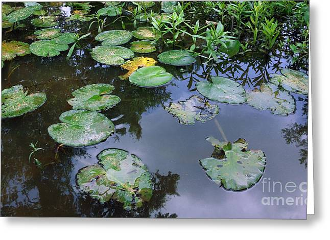 Lilly Pad Reflections Greeting Card