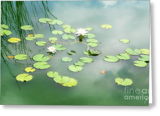 Greeting Card featuring the photograph Lilly Pads by Erika Weber