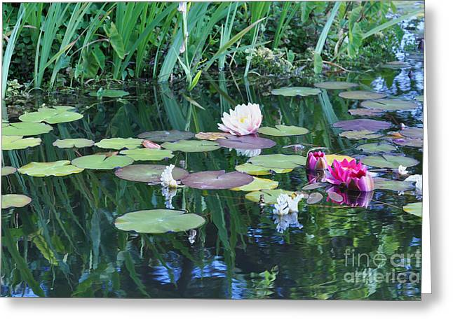 Lilly Pond At Mission San Juan Capistrano Greeting Card by Debby Pueschel