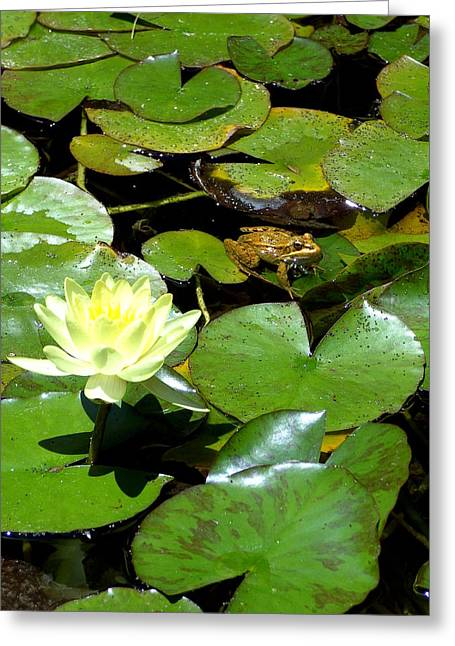 Lily And Amphibian Friend Greeting Card
