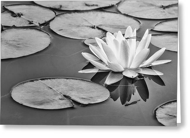 Lily And Dragon Fly Greeting Card by Peg Runyan