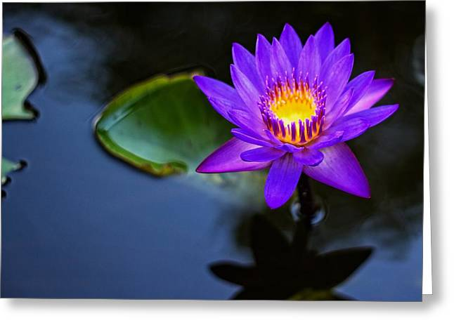 Greeting Card featuring the photograph Lily Awakens by Dave Files