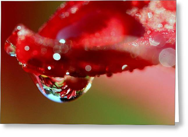 Greeting Card featuring the photograph Lily Droplets by Suzanne Stout